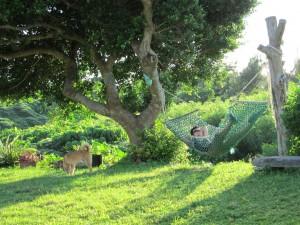 宮良農園の庭でハンモックにゆられる