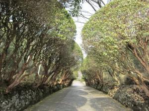箱根恩賜公園の並木道
